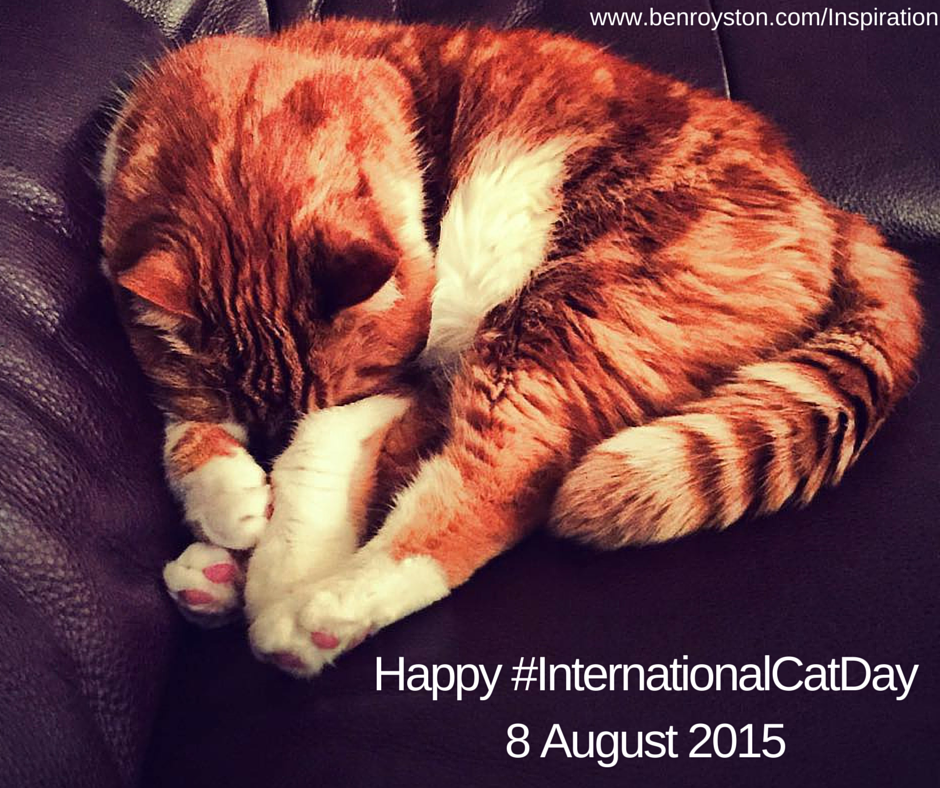 International Cat Day awareness day