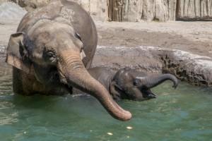 World Elephant Day Awareness Day UK